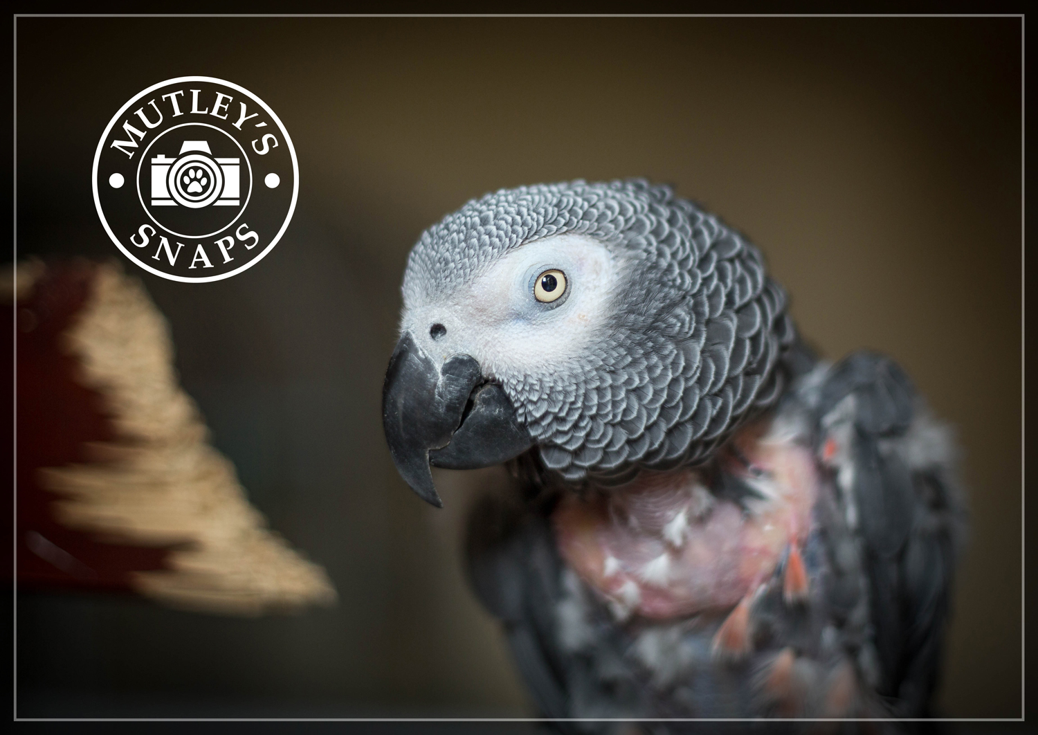 Roy's Photo Session By Mutley's Snaps Pet Photography | Parrot Photography