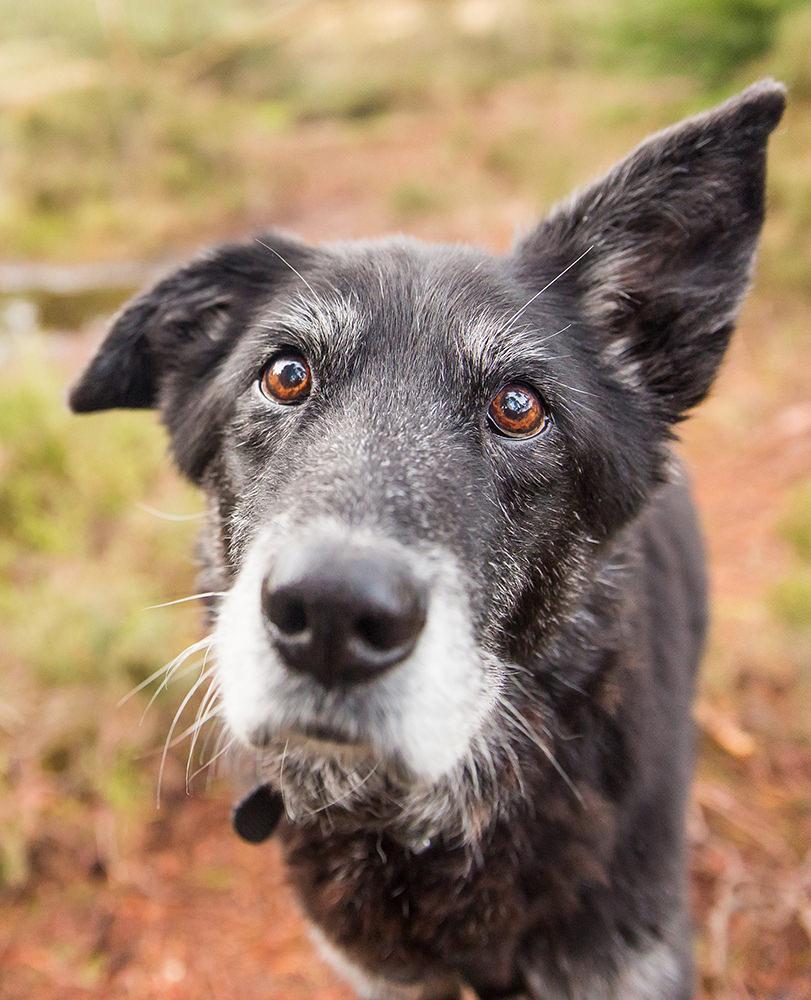 Celebrating-Mutleys-Pet-Photography-Scotland