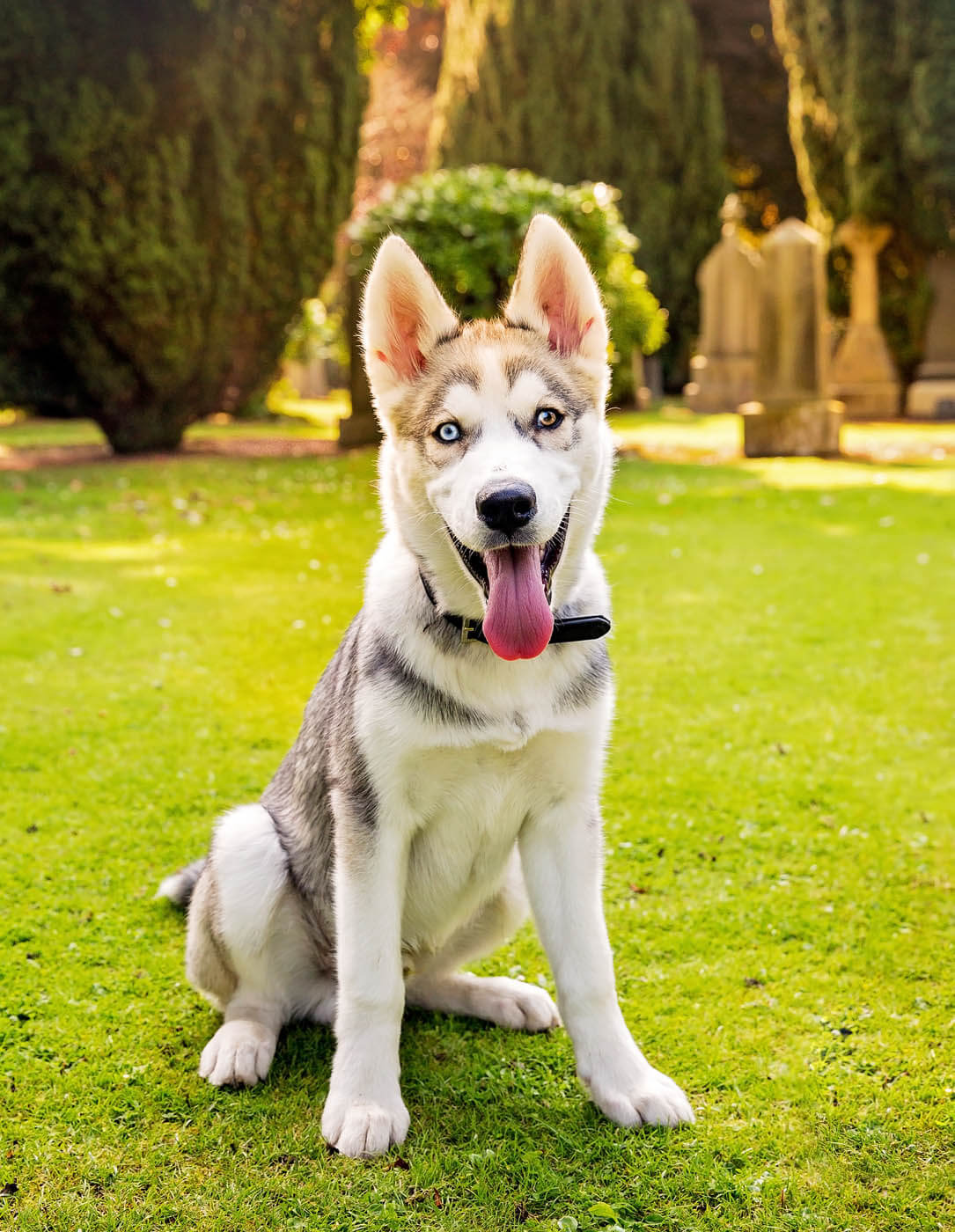 Location-Pet-Photography-Glasgow-8