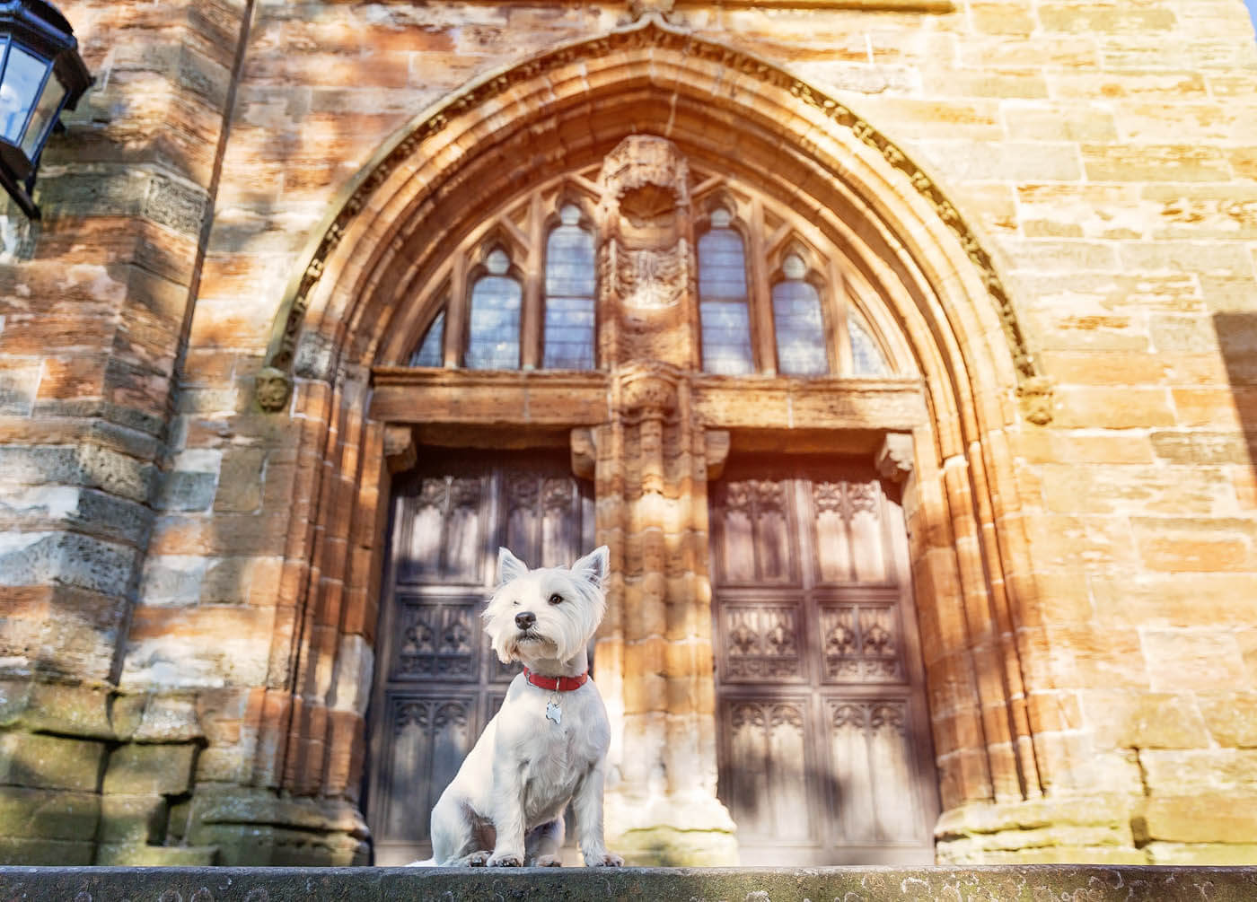 Location-Pet-Photography-Glasgow-9