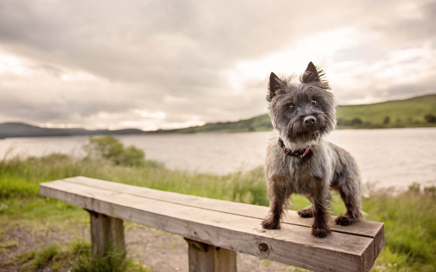 Location-Pet-Photography-Linthgow