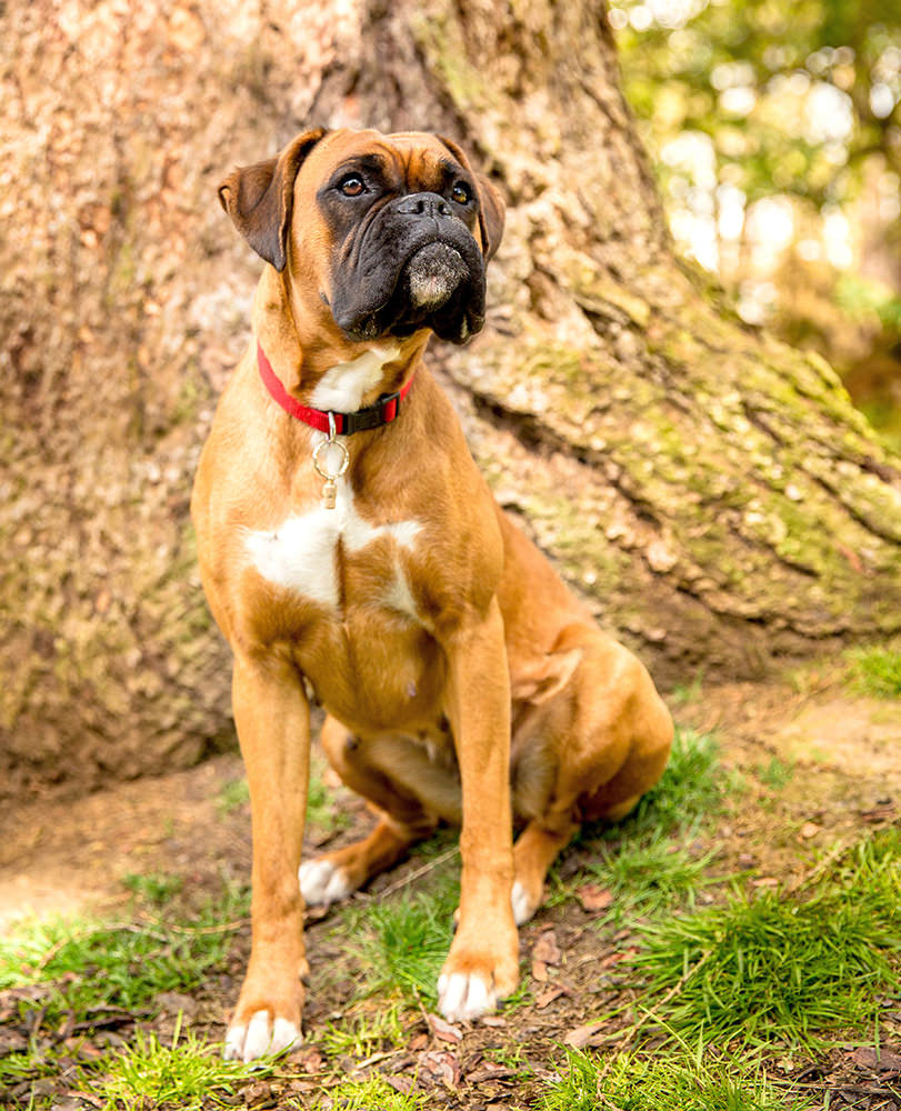On-location-pet-photography-Mutleys-snaps-1