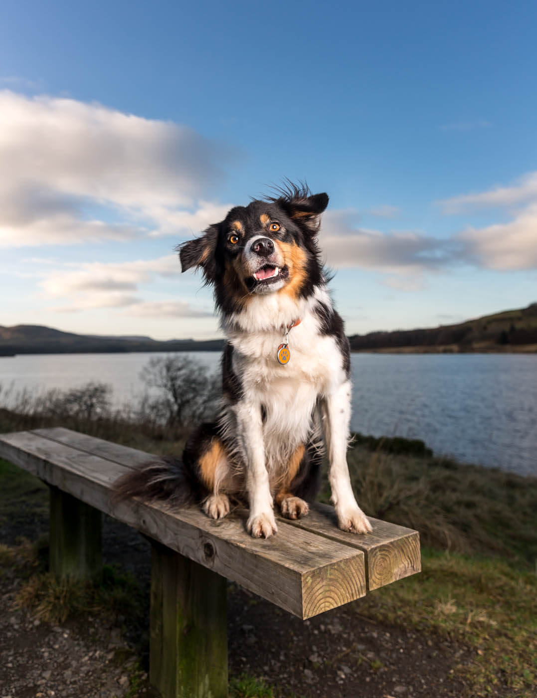 Outdoor-Collie-Dog-Photography-Falkirk