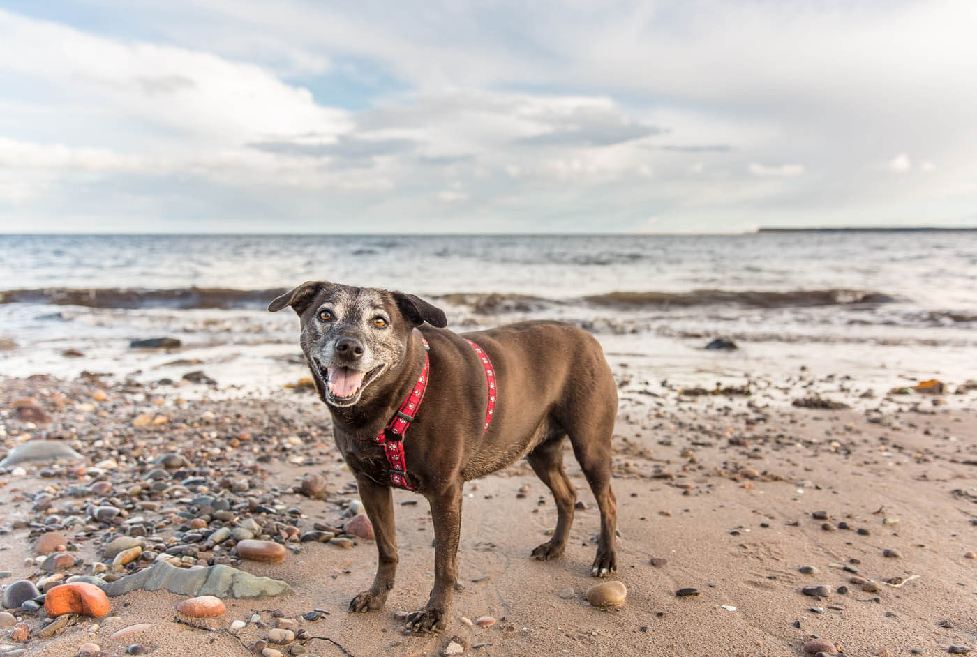 Outdoor-Pet-Photography-Falkirk