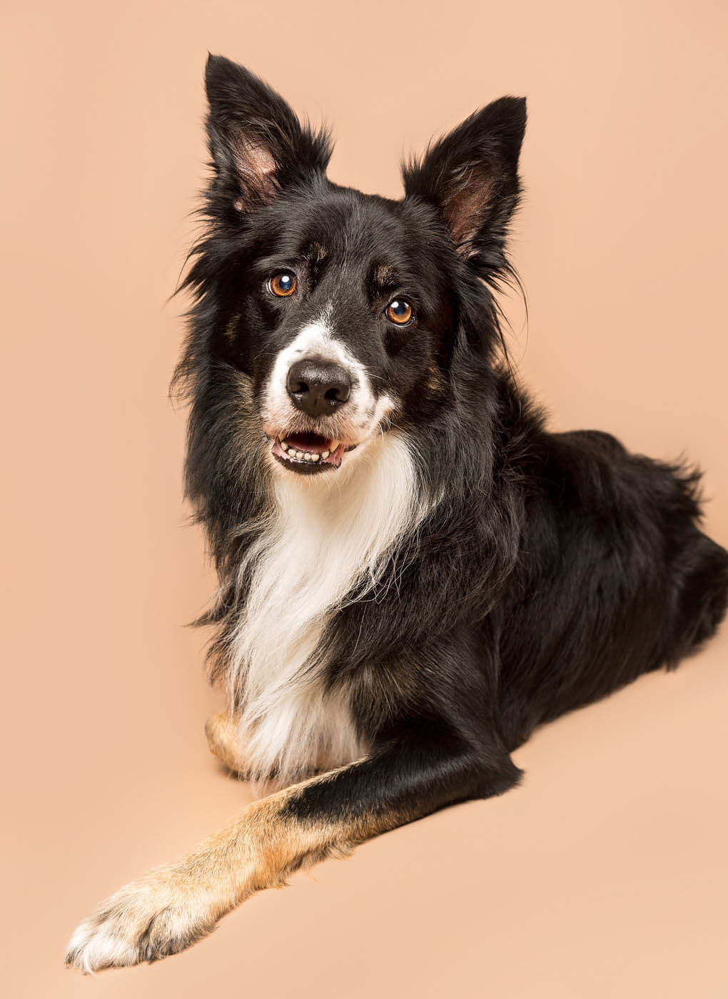 Studio-Pet-Photography-Falkirk-12
