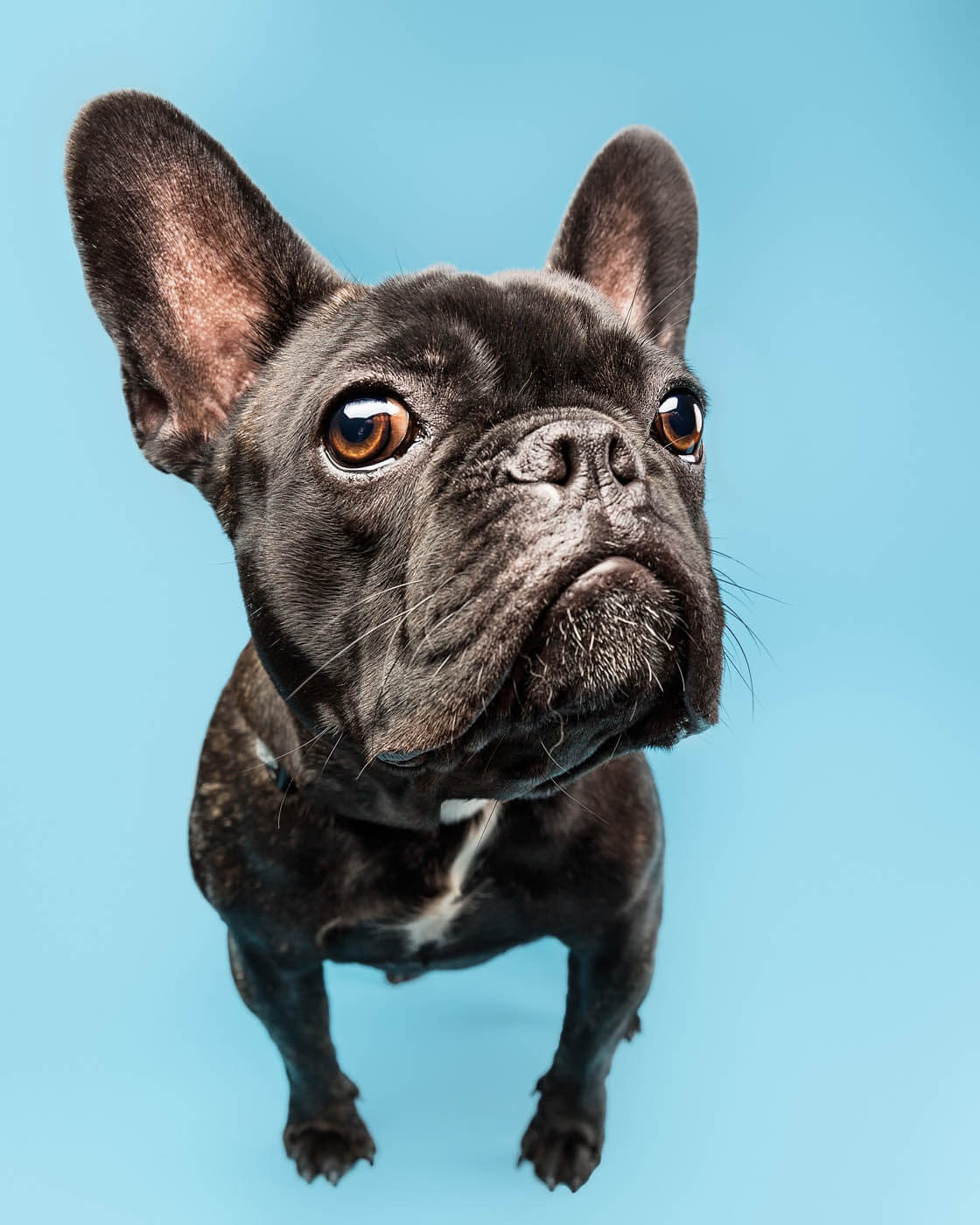 Studio-Pet-Photography-Falkirk-17