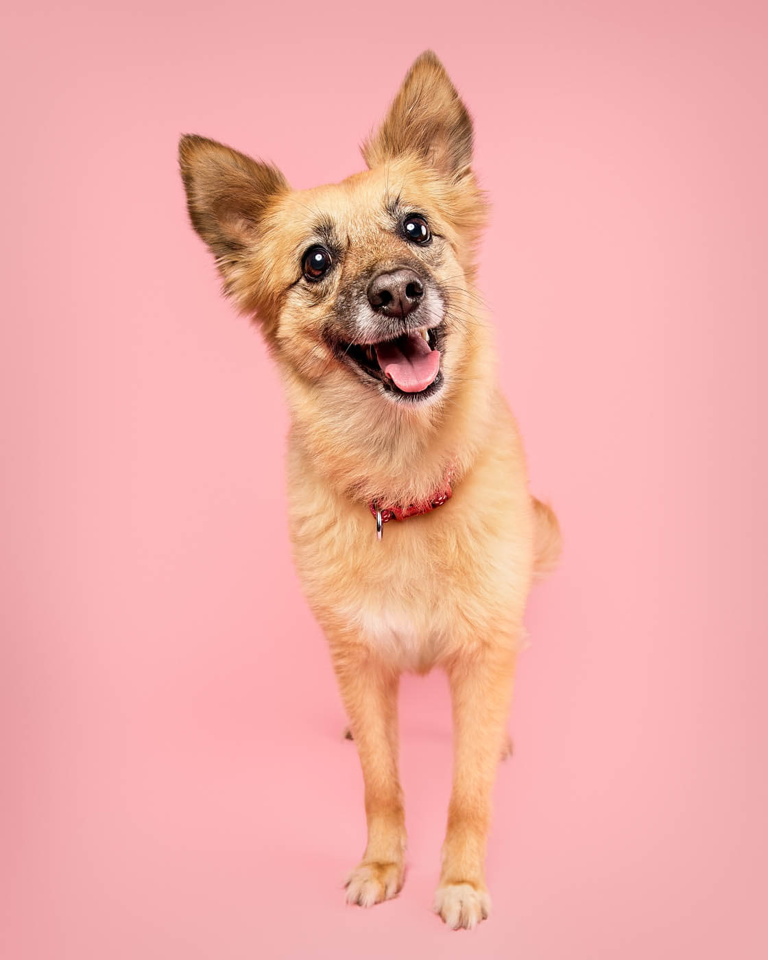 Studio-Pet-Photography-Falkirk-2