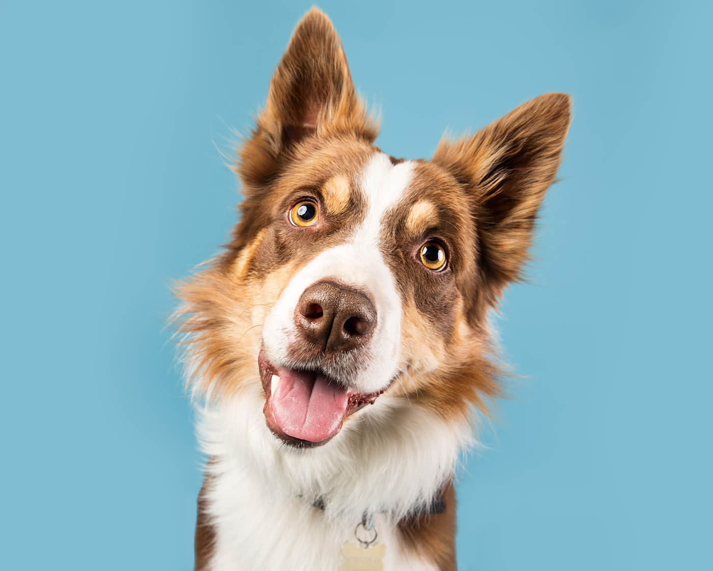 Studio-Pet-Photography-Falkirk-24