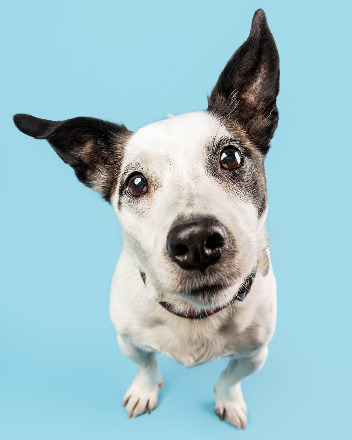 Studio-Pet-Photography-Falkirk-25