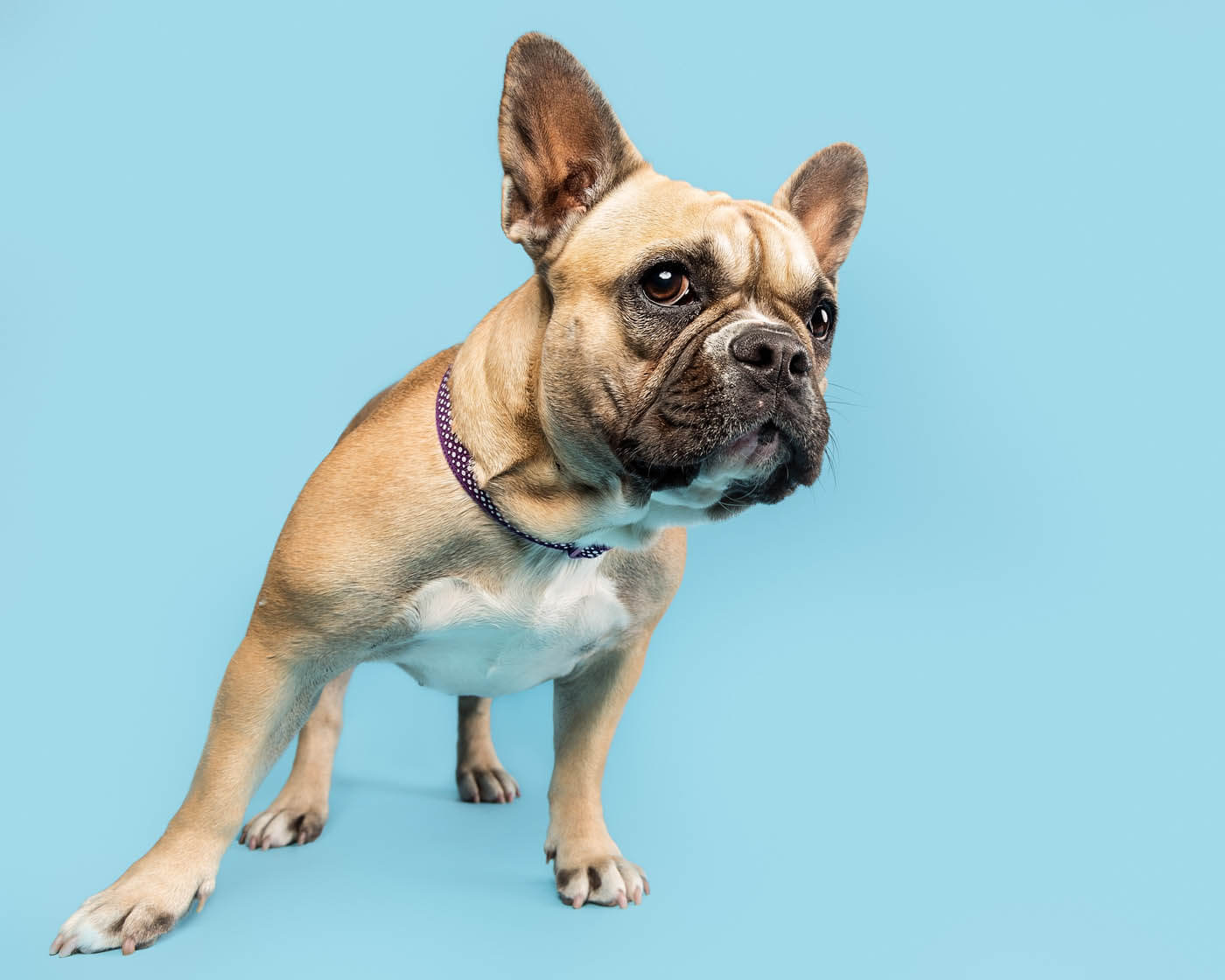 Studio-Pet-Photography-Falkirk-27