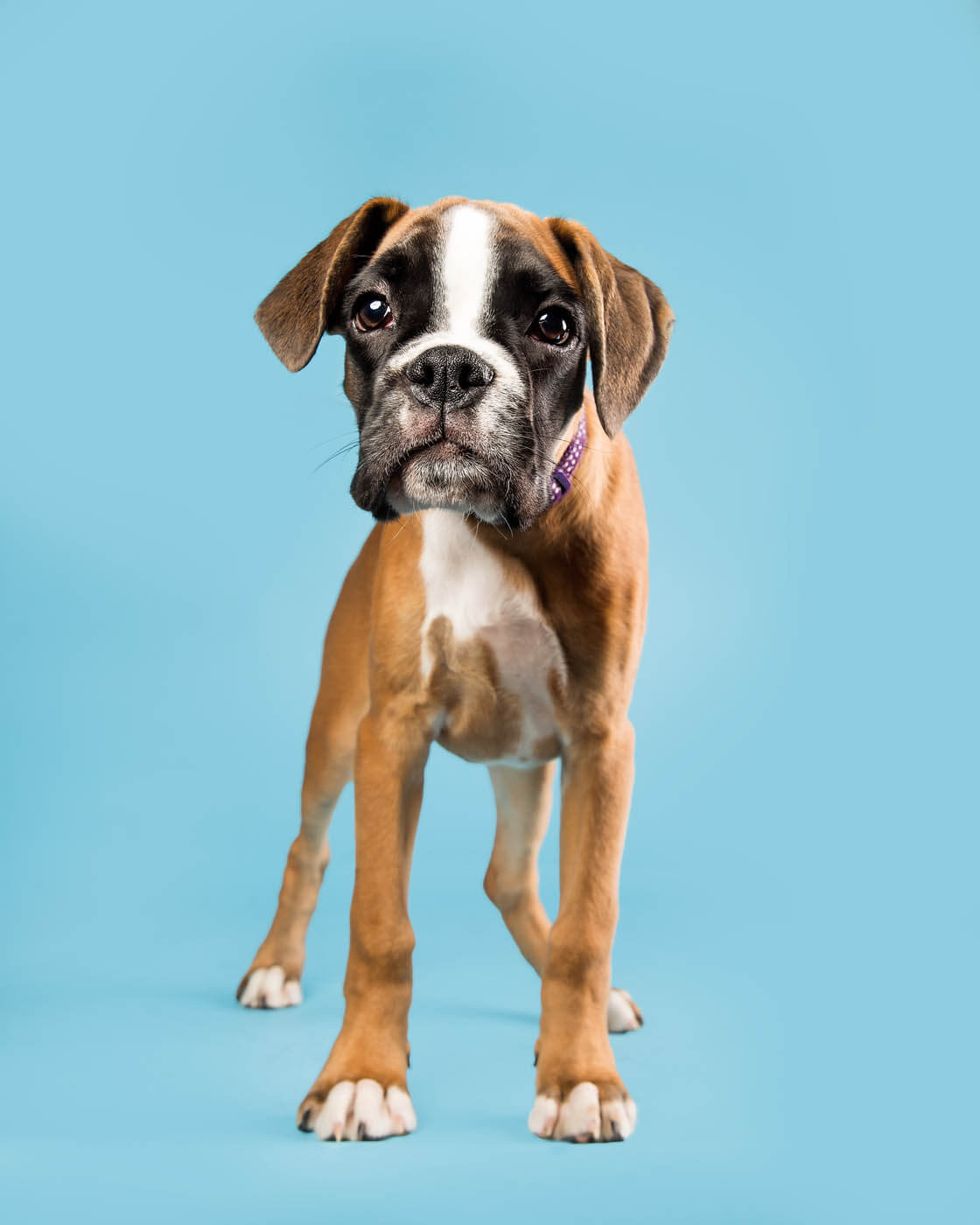 Studio-Pet-Photography-Falkirk-28