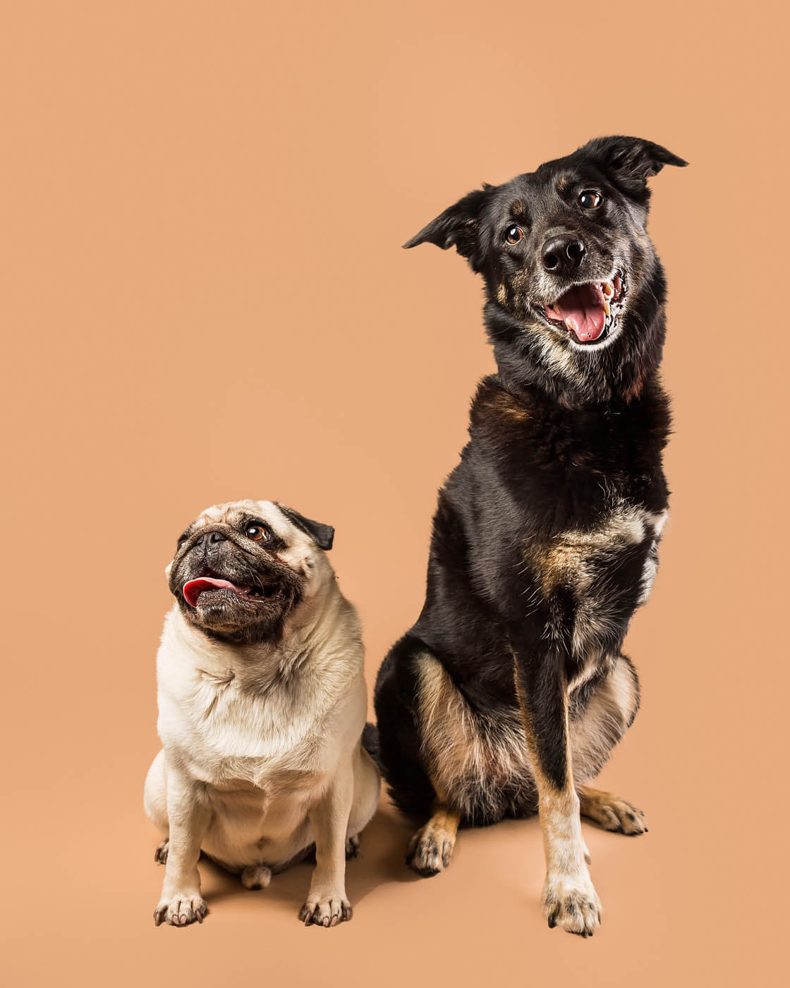 Studio-Pet-Photography-Falkirk-32