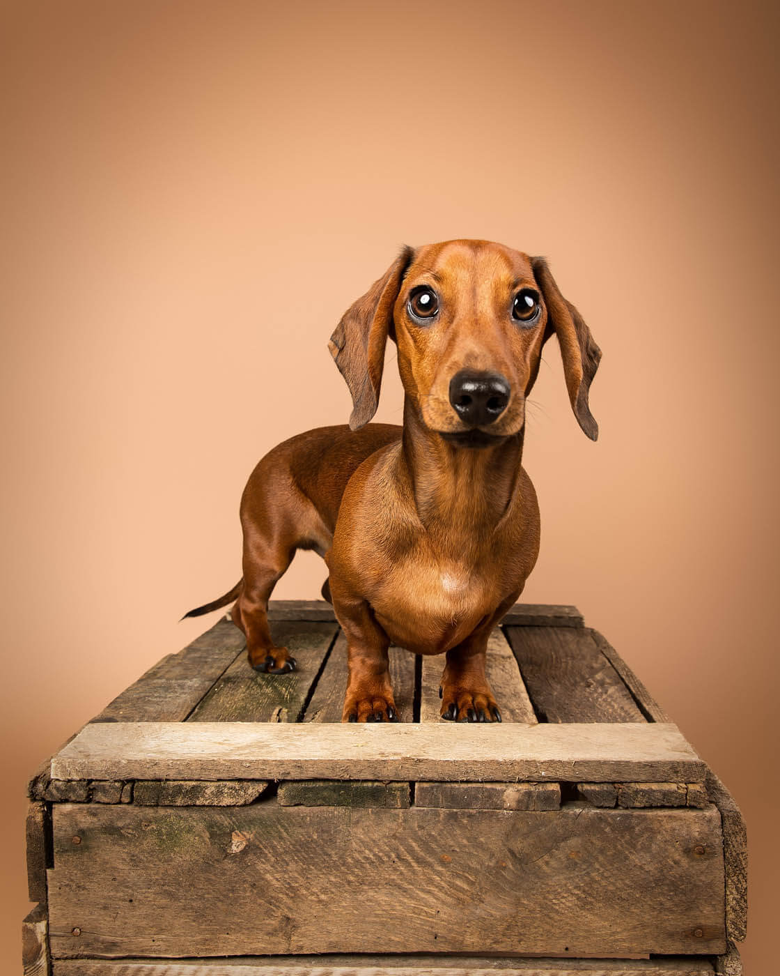 Studio-Pet-Photography-Falkirk-34