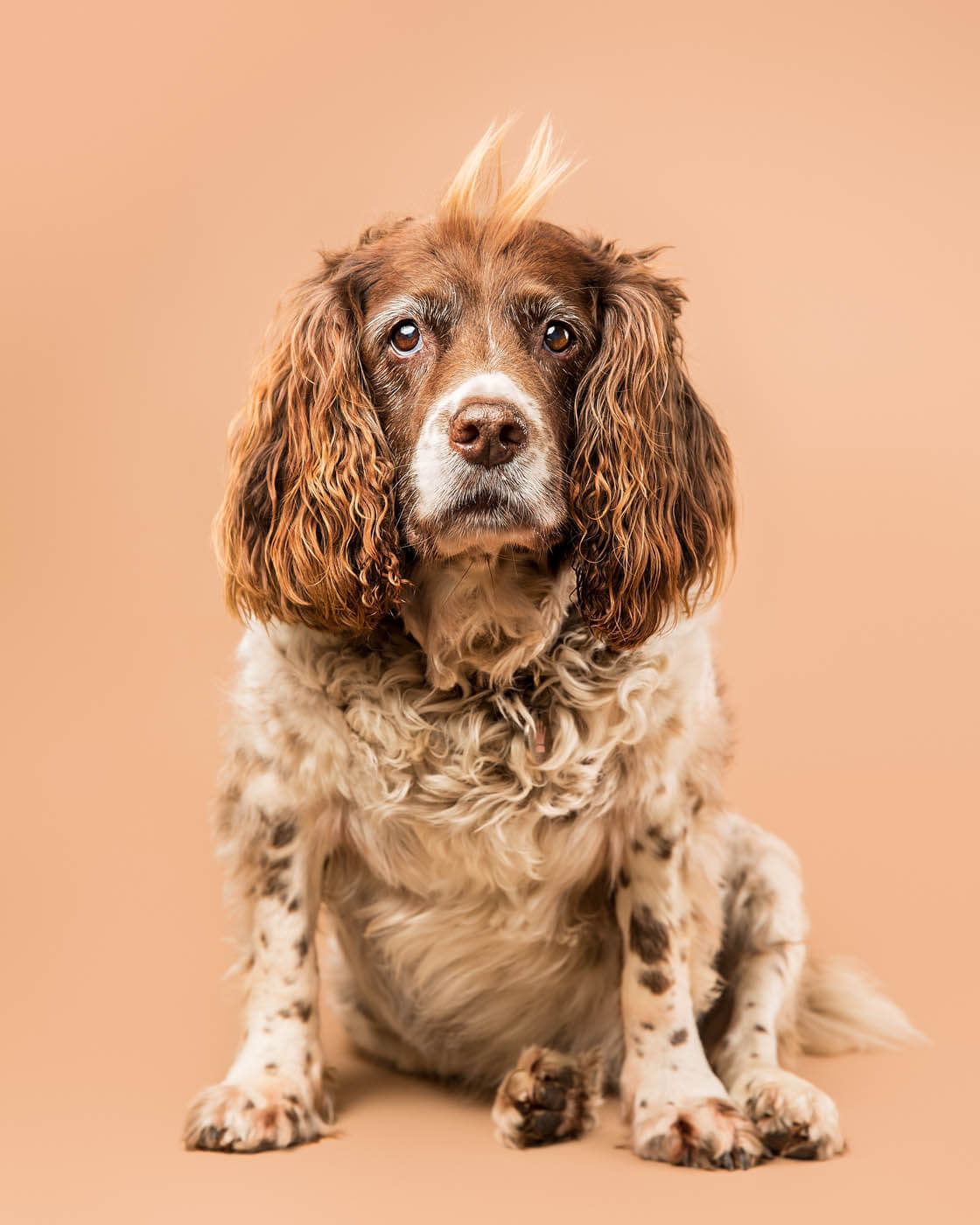 Studio-Pet-Photography-Falkirk-5