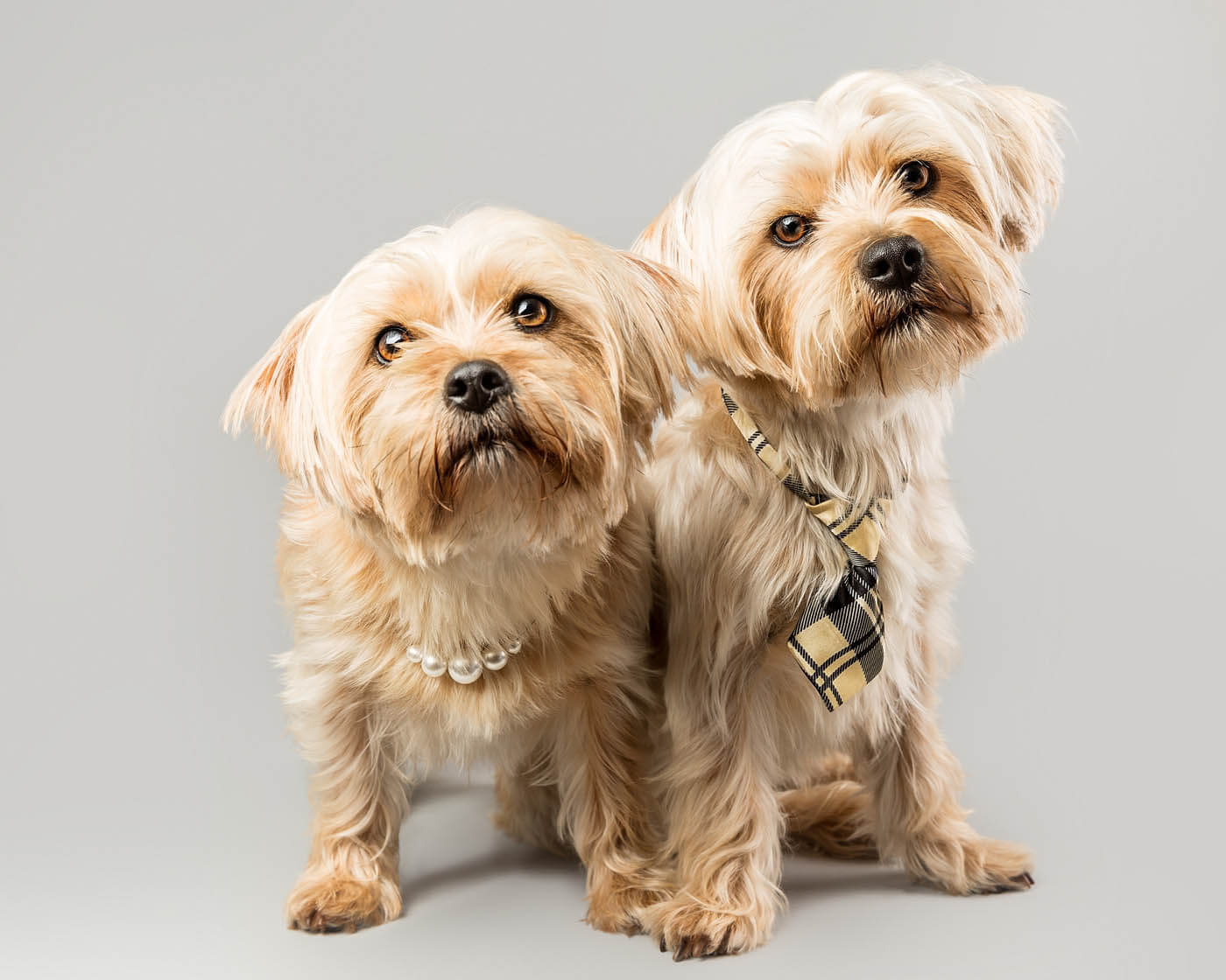 Studio-Pet-Photography-Falkirk-6