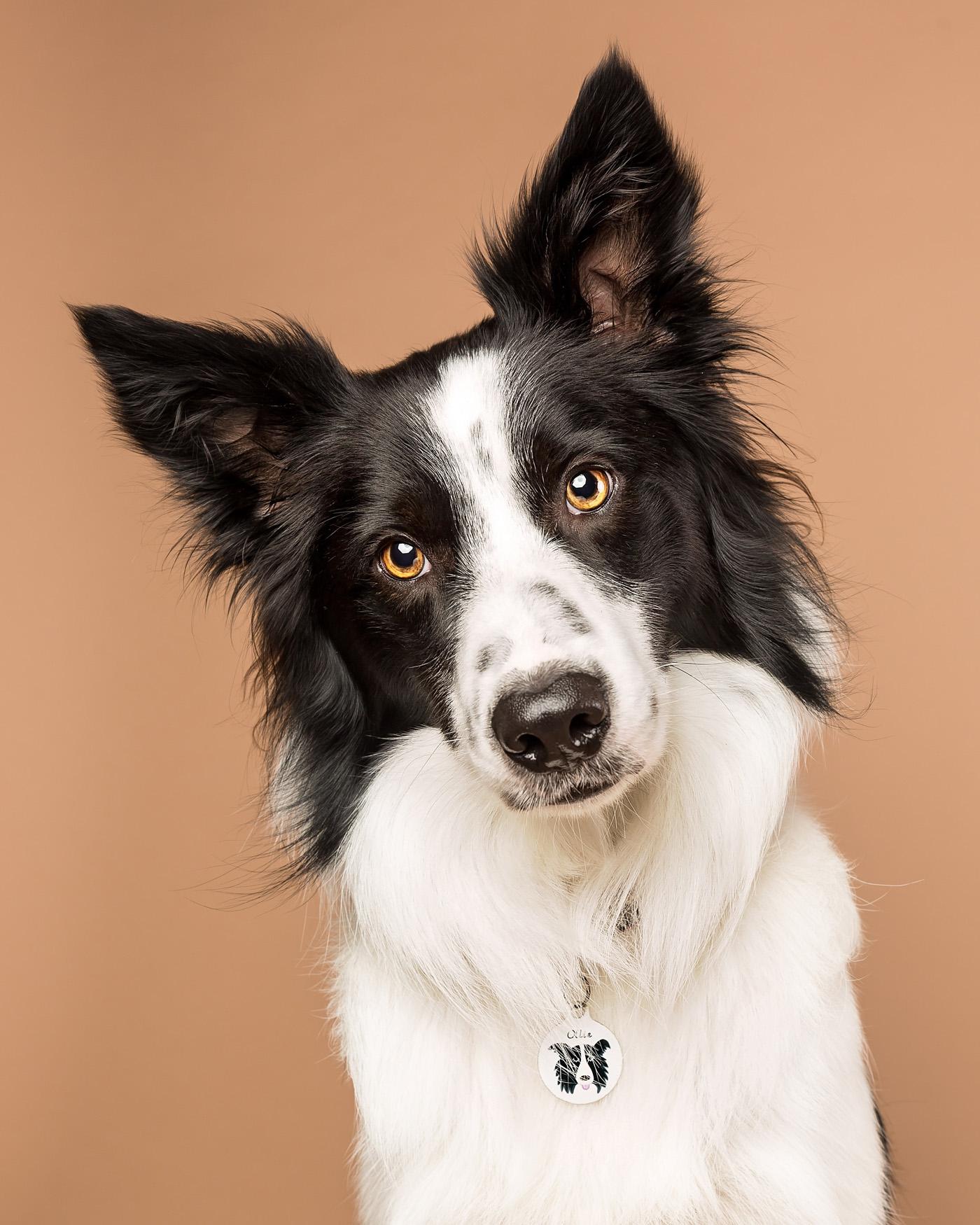 самые умные собаки с картинками сладкого острого перца