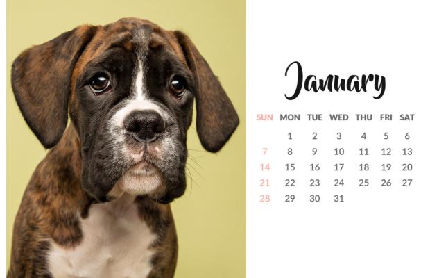 2018 Pet Photography Studio Calendar – Mutley's Snaps Falkirk