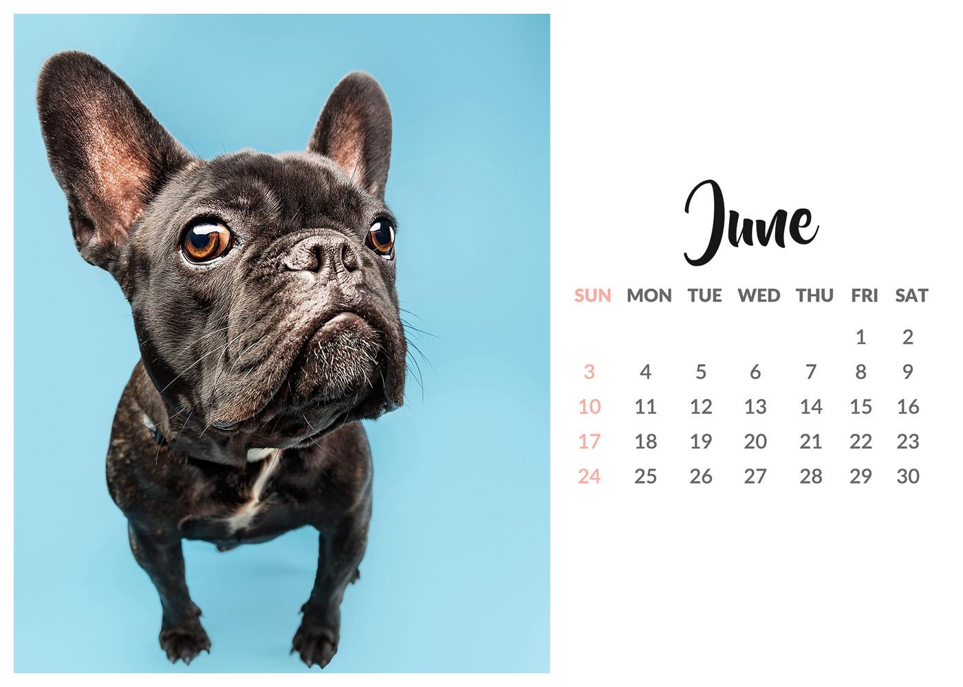 Dog freebies uk 2018