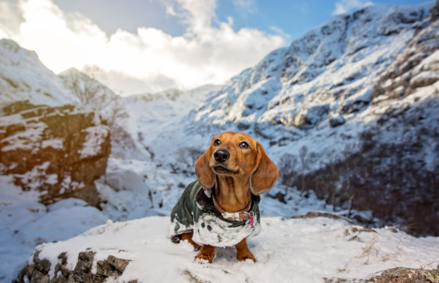 Flo the Dachshund's Glencoe Adventure – Scottish Dog Photographer