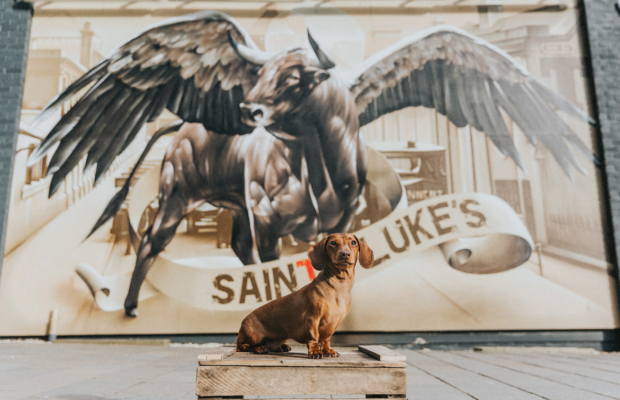 Slink the Dachshund at World Famous Barrowlands Market in Glasgow – Dog Photography