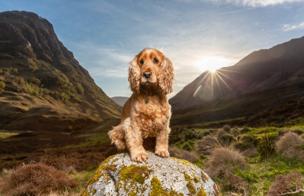 Poppy's Epic Glencoe Adventure – Scottish Dog Photographer