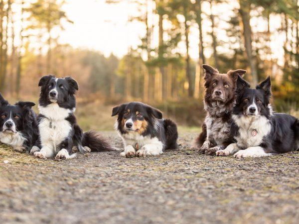 Mutleys-Snaps-on-location-Pet-Photography-Falkirk