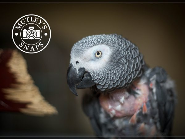 Roy-Mutleys-Snaps-Pet-Photography-Parrot1