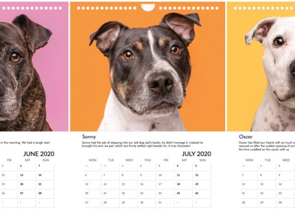 Staffie calender - scottish dog photographer