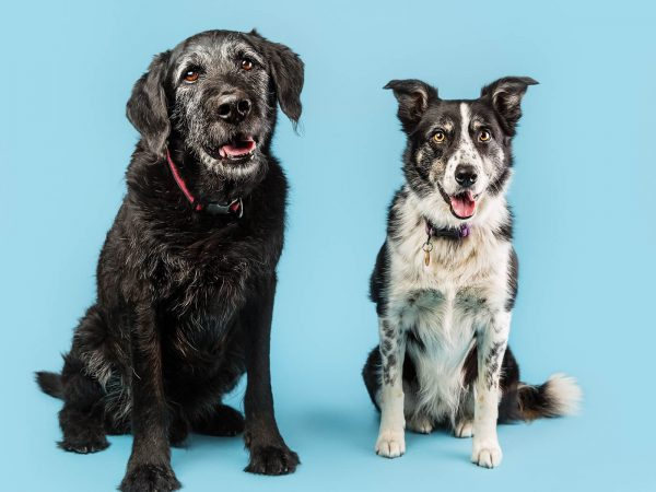 Wallace-Vets-Brewdog-Dundee-Pop-Up-Dog-Photography-for-SSPCA-3