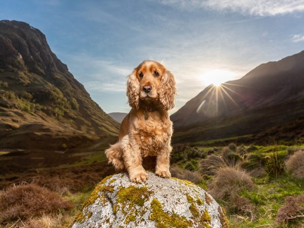 cocker-spaniel-glencoe-dedicated-scottish-canine-photographer-Falkirk-dog-21