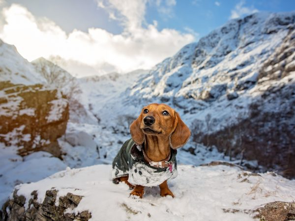 dachund-Glencoe-Scottish_Highlands-Scotland-Dog-Photographer-28